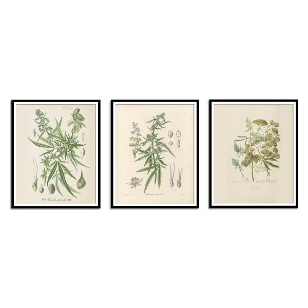 Vintage Cannabis Botanical Print - 1868  - 2